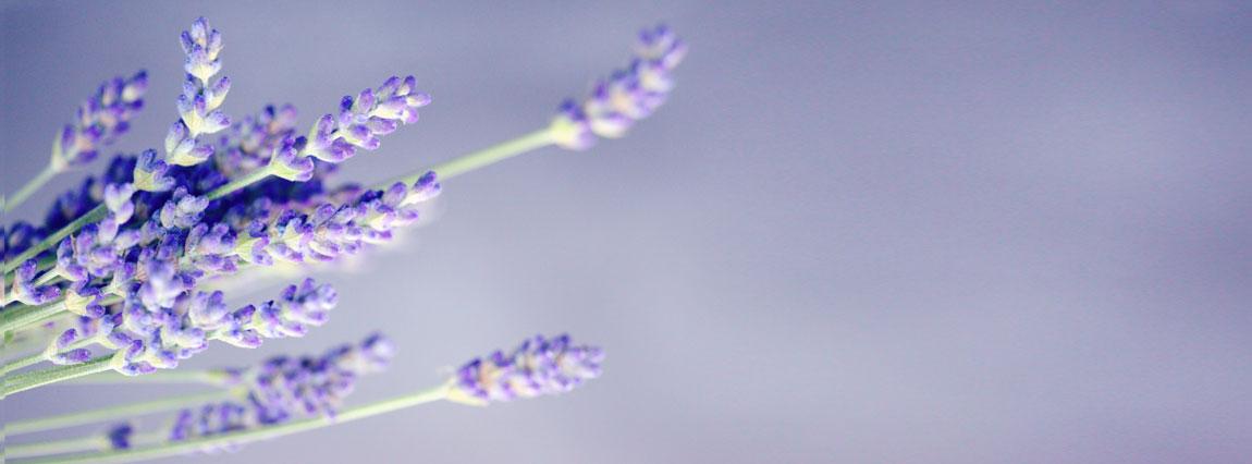 Aine Sweeney, Chiropractor - lavendar bouquet
