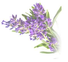 lavendar bouquet